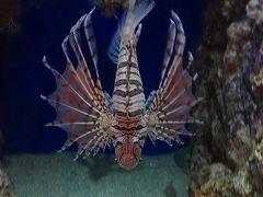 竹島水族館の見学