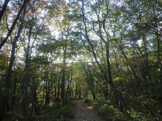 東京から1泊2日で那須高原へ行ってきました。<br />旅の目的は那須の御用邸の半分が一般解放された「那須平成の森」へ紅葉狩りに行くことと虹鱒のルアーフィッシングに行くことと美味しいものを食べてリフレッシュすることです。
