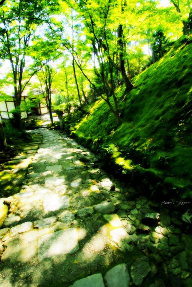 二尊院から向かったのは常寂光土の地、常寂光寺です。<br /><br />慶長元年(1596)に日蓮宗大本山、本圀寺十六世・究竟院日禎(にっしん)上人によって終の棲家として開いたお寺です。<br /><br />本尊は十界大曼荼羅を祀り、山号は「小倉山」を号します。<br />初期の境内伽藍は小早川秀秋の助力によって構成されていきました。<br /><br />常寂光寺の名の由来は「常寂光土」から来ています。<br />常寂光土とは仏様のおられる場所を表すものです。<br />消滅変化がなく、煩悩や心の乱れや苦悩もない。<br />仏様の慈悲が光のように行き渡っている場所のことです。<br /><br />特に4月〜5月の常寂光寺が常寂光土を表すと言われ、永遠に壊れることのない光に満ちた浄土の世界。<br />いわば仏教の理想郷、これを現世に表しているのが常寂光寺なのです。<br /><br /><br />今でこそ紅葉のスポットとして有名な常寂光寺ですが、昔の都人は新緑のモミジこそ美しいと言い「青もみじ」の呼び名の発祥地として愛されてきたお寺です。<br />
