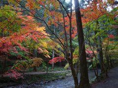 紅葉の新名所、遠州森の小国神社