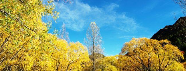 秋の星空と紅葉散歩 in Queenstown アロ...