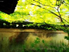 よっしゃ、京都へ行くどす(ぇ)!2012。 宝厳院~弘源寺~法輪寺。