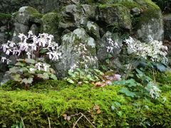 京都 大文字草咲く山寺・阿弥陀寺と府立植物園の秋薔薇