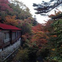六甲山の紅葉と有馬温泉