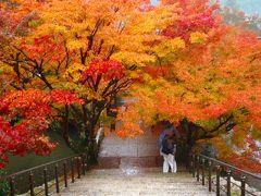 雨の丹波路 紅葉めぐり