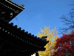 子どもと一緒に歩く、紅葉が彩る南禅寺と永観堂