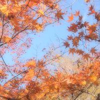 茨城で紅葉狩り☆ 花貫渓谷→袋田の滝→竜神大吊橋をバスで巡る、大忙し&大渋滞の旅