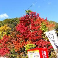 秋を求めて in 九年庵 (佐賀県神埼市)