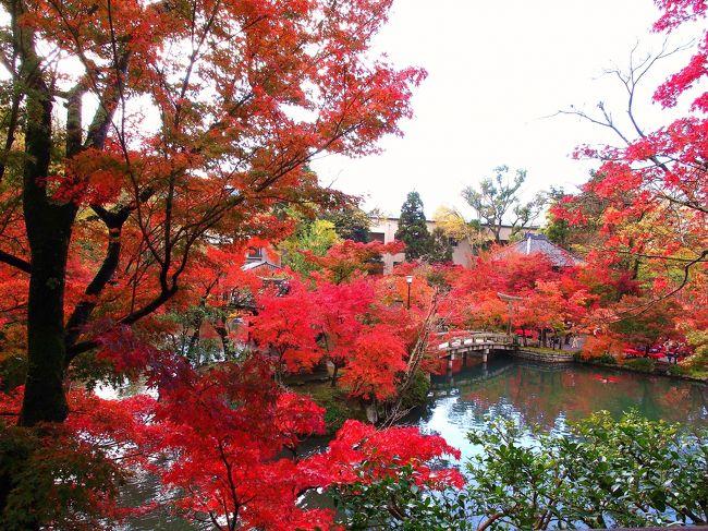 今年は急に寒くなったせいか、思ったより早く美しい紅葉が見られるようです。<br /><br />天気予報を見て、思い立って紅葉で有名な京都の「永観堂禅林寺」へ行ってきました。<br /><br />平日にも関わらず大勢の人出。<br />ちょうど、秋の寺宝展中でした。(平成24年11月11日(日)〜12月5日(水))<br /><br /><br />その後、南禅寺前を通って、京都市美術館の「大エルミタージュ美術館展」へ。<br /><br />お昼は永観堂のお茶屋さんで済ませて駆け足で回りました。<br /><br />駅もバスも道路もお寺も美術館も人が一杯で人に少々人に酔ってしまいました。<br />平日なのに・・・(^ ^;)<br /><br />計画的にもう少し早く出発すれば良かったな〜。<br /><br />でも、キレイな紅葉を沢山見れて楽しかったです♪<br /><br /><br /><br />