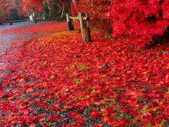 京都 紅葉めぐり~鍬山神社の紅葉