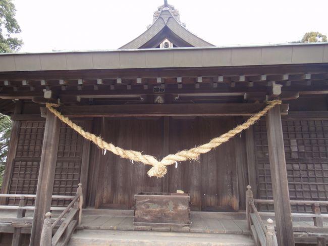 今春、常陸太田の真弓神社のある真弓山に登った。昨年の大震災でかなり社殿付近が崩れたと聞いていたので、事前に状態を神社社務所に聞いておいた。登ることは可能らしい。大鳥居のある西参道から20分ほどで着くとのこと。<br /><br />常陸太田に縁がある者として、一度真弓神社を参拝したいと思っていた。<br />以前に車で常陸太田市内を経由して真弓神社入口まで行ったことがあるが、随分と車を走らせた記憶がある。<br /><br />今回は、常陸太田経由でない常磐線大甕駅からの径路をとった。<br />東京方面から行く場合、水戸で水郡線に乗り換えてわざわざ常陸太田に出なくとも、常磐線でまっすぐ行き、大甕駅で下り、そこからタクシーで行く方が早いと判断。<br /><br />常磐線大甕駅で下車、タクシー運転手さんに「真弓山の真弓神社の近くまで行ってください。西参道の標識があると思います」と頼む。寒水石の砕石工場を過ぎると間もなくのはずだ。注意して道路わきの西参道の標識を探す。「あれだ」と思ったが、タクシーは通り過ぎていく。あわてて運転手さんに停めてもらい、下車。この辺りは採石場が近いためトラックが走ってきた。真弓山は古来から寒水石の産地として著名である。<br /><br />参道入り口には確かに大鳥居があった。その近くに真弓神社沿革碑があり、それには真弓神社の祭神は大己貴命と少彦名命とある。出雲系の神様だ。<br />鳥居を潜ると登山道に入る。我々以外誰も登る人はいない。参道はがれきで荒れていた。両側の猿の石像のうち左側がかなり傷んでいた。<br /><br />山道を登り、20分ほどて真弓神社の社殿に着いた。この辺りは震災のためかなり崩れたようだ。寄進者が記載された碑が横倒しに倒れ、破壊されて、無残な状態だ。ところどころ工事中の柵が設けられ、新たに土台がセメントで固められ、復旧が進みつつあった。社務所らしき建物があるが、無人。<br /><br />尾根道を歩く。表参道は、ロープが張られ通行禁止の状態。やはり被害は大きかったのだと痛感する。<br /><br />せっかく来たのだからと樹齢940年の「爺杉」を見ることにした。下った場所にあったが、下り口の標識が小さいので、見落としてしまった。やっとの思いで下り口を見つけて、巨大杉にたどり着いた。木肌が赤くつやつやしている。途中から幹が二俣に分かれ、近づくとかなり大きいことが分る。幹周囲10.4mとのこと。<br /><br />帰路も西参道を下り、タクシーを待たせてある石の集積場に着く。ここまでの所要時間2時間強。まあまあの行程か。帰りに麓にある真弓神社社務所に寄って、お守りを授った。<br /><br /><br />