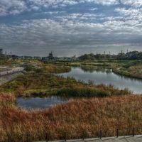 秋のいずみ野を歩く