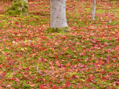 京都・奈良の秋 2012年 #2