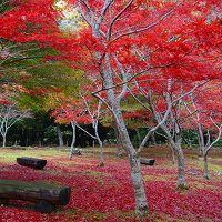 道の駅 天城越え 昭和の森会館の紅葉