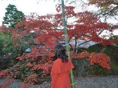 愛犬と紅葉の箱根へ① 箱根美術館のモミジ