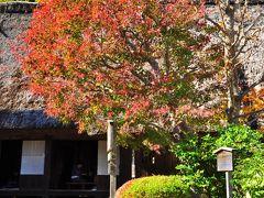 2012年11月18日の日本民家園の紅葉