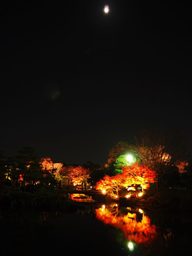 熱田区の一号線沿いにある白鳥庭園のライトアップに行ってきました。<br />公園無料開園日