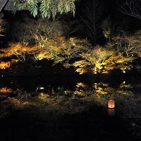たまゆらの夕べ「夜間ライトアップ」 in 御船山楽園