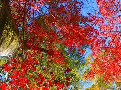 室津のカキと龍野の紅葉めぐり