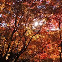 愛岐トンネル群 秋の特別公開 −紅葉狩り−