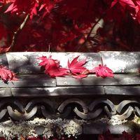 鍬山神社と貴船神社で最後の紅葉狩り♪withワンコ