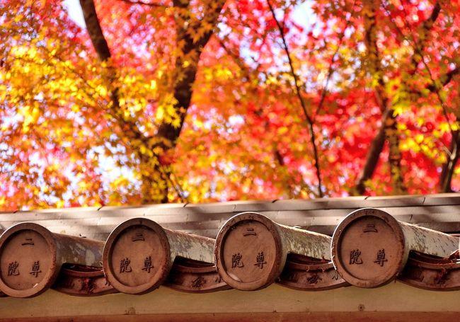 JR東海「そうだ 京都、行こう。・・・紅葉は、旅の入口にすぎませんでした」のキャッチコピーに感化され、晩秋の風物詩 紅葉狩りに勤しんでまいりました。今回のテーマは、少々ベタではありますが、『JR東海 京都観光キャンペーン』を辿る旅です。まず、2012年キャンペーンポスターの秋景色を彩る二尊院。そして1994年秋と2010年初夏を幻想的に魅了した祇王寺。次に、2007年秋と2011年初夏に胸躍らせた常寂光寺を訪ねてみました。いずれも嵯峨野に佇む古刹ですので、のんびりと過ぎ行く秋を愛でたいところです。しかし現実は、帰途の混雑が脳裏に浮かび、ツアー旅行のように時間に追われる始末。それでも晩秋の一日を満喫することができました。何と言っても、四季に一番うるさい京都の秋の代名詞を冠するスポットですので、午後2時頃には、長辻通(渡月橋〜野宮)の歩行者天国は紙上で拝見した大阪マラソン並みの人で埋め尽くされていました。<br /><散策コース><br />嵐山 渡月橋---野宮神社---二尊院---祇王寺---常寂光寺---野宮神社---嵯峨野 竹林の道---渡月橋<br /><前編>は、二尊院と祇王寺を紹介いたします。<br />二尊院へは渡月橋から約2km。普通に歩けば20分強の距離ですが、牛歩で進む行楽シーズンであればもう少し余裕を見てください。二尊院へは午前10時前に到着しましたが、道中はさほど込み合っていませんでした。野宮神社からは落柿舎経由の近道を利用しました。<br />