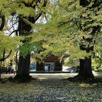 紅葉を求めて、秋川渓谷へ 〜新宿からホリデー快速で約1時間。手軽なハイキングコースです〜