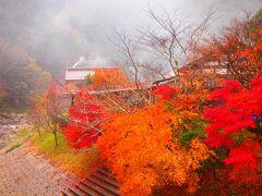 紅葉を巡る、雨の香嵐渓、晴れの小國神社 & イルミネーションのつま恋