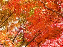丹沢湖の紅葉に誘われて!!
