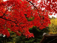 三渓園で紅葉&初めてのカワセミ撮影を楽しむ!