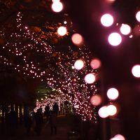 冬の桜・・・★目黒川沿いが、イルミネーションの桜並木でキラキラ~!★