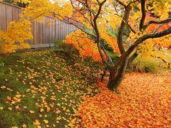 京都の御所と離宮(13) 修学院離宮で優雅な紅葉狩りを