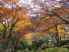 2012 素晴らしい落葉~ 箱根 蓬莱園 Houraien in Hakone