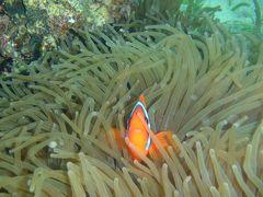 2012/11/18~23 セブ島シャングリラ滞在:ダイビングとシュノーケルとスパの日々