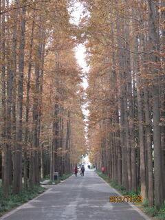 上海の植物園・2012年紅葉