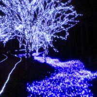 京都 イルミネーション「冬のほたる」