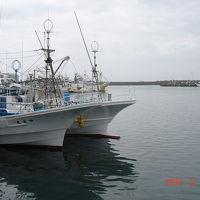 外川漁港でバードウォッチング [2012](1)