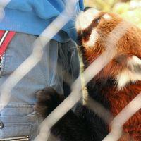 歳末レッサーパンダ詣とイルミネーション(1)羽村市動物公園(前編)レッサーパンダとフェネックやかわいい系の動物たち