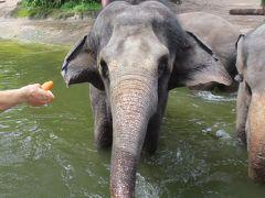 2012-2013年末年始をシンガポールで③シンガポール動物園
