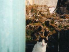 猫、ネコ、NEKO、海外でねこに出会うと思わずシャッタ−を押して暫く遊んで行きます♪♪♪