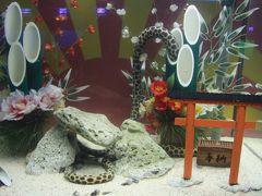 幸運を呼ぶ真っ白な海亀!串本海中公園、大島・樫野崎灯台、橋杭岩へドライブ