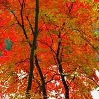 仁科三湖-1 青木湖 紅葉真っ盛りの湖畔 ☆塩の道の名残りも