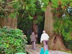 大門坂 熊野古道/中辺路の一部を歩く ☆杉並木と石畳の参道