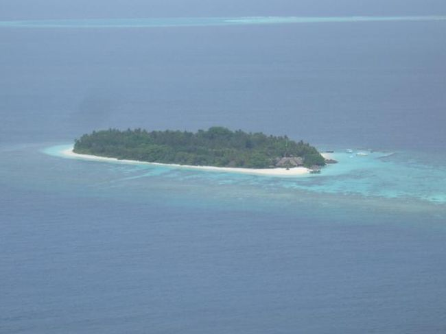 Madoogali Resort(マドゥガリリゾート)<br />(2013年1月12日現在の情報です。情報は予告なしに変更されますので、予めご了承ください。)<br /><br />ハウスリーフが良く、モルディブらしいリゾート…。<br />『マドゥガリ』モルディブらしさがあるナチュラルリゾート。<br />そんなリゾートを探すのが難しいですが、昔から変わらず残っています。<br />ヤシの木、バニヤンツリー、ジャスミンの木々など豊富で島が木で満たされています。<br />島内は静かでのんびりしたムード、うさぎさんもいます…。<br />日本人の方はほとんどいません…。<br />リーズブルで1棟独立のお部屋は、日本人のお客様にも人気です。<br /><br />Ali Atoll北西部に位置し、空港から水上飛行機で約30分。<br />水上飛行機はMaldivian Air Taxi。赤い水上飛行機です。<br />水上飛行機チェックイン後、国際線ターミナルから空港東側にある水上飛行機のターミナルまではバスで移動します。<br />水上飛行機のボーディング時間までは、広い待合室でお待ちいただけます。<br />マドゥガリの水上飛行機のプラットホームは、リゾートからドーニーで約15弱のところにあります。ドーニーにはリゾートスタッフが乗って来るので安心!<br />ドーニーから、だんだんリゾートが近づいてくるのも楽しみです。<br />リゾート到着後、モルディブらしい自然が満点の景色。レセプションまでの道にはヤシの木の緑が豊富で。ウサギちゃんのご挨拶をしてくれます。<br />レセプションでチェックイン。<br />ヤシの実ジュースのウエルカムドリンク!!!<br />甘くてとても美味しいです。<br />飲み終えた後、中を割ってもらい、白いゼリー状の物を食べると美味しいです。<br /><br />島の雰囲気<br />昔はイタリア人が主のリゾートでしたが、今は、インターナショナルでドイツ、イギリスのお客様もいます。日本人のお客様はめったにいません。<br />島内はとても静かです…。<br />ダイバーのお客様は多くはないですが、アリ環礁西側は珊瑚が綺麗で、チャネルダイビングもあり、乾季にはマンタポイントもあり満足だが高い。<br />島1周歩いても約15分…と小さな島。<br />島内に入り、最初に目するのは背の高〜いヤシの木。<br />また、まわり何処を見ても緑が多く作られた自然ではないので、ほっとする雰囲気。<br />お部屋の前を1周歩いていると、ブーゲンビリアのアーチ&ブーゲンビリアの木々もあり、とても綺麗です。大きなバンヤンツリーもあります。そしてお部屋の外見が珊瑚後の壁のところがあり、あ〜モルディブの自然を感じる島です。<br />お部屋の前は緑が多く、木々の隙間からマリンブルーのラグーンが覗けます。<br />ビーチはしま1周ありますが、季節&風の向きにより削られる場所もあります。<br />皆様、良く気になるのが防波堤。マドゥガリは、なんと防波堤はないのです…<br />ほんの少しだけ、メインの桟橋のところに防波堤はありますが、全然気になりません。<br />珍しい島です。<br />それなのに、西方向には大きなビーチが広がっていて綺麗です。<br />ビーチチェアが置いてありますので、日焼けを満喫するお客様の姿が目にします。<br />夕方はサンセットが綺麗に眺められ、波際にはマダラトビエイさんがゆらゆらと揺られながらヤドカリさんを探しています。夕食のお時間でしょうか〜???<br />Veli Café'では、19:00からサメの獲づけをしています。大きなナースシャークが来てとても面白いです。(悪天候時は中止されていますので、お天気が怪しい時はスタッフにご確認ください。)<br />レストラン&バーも飾らない自然スタイル。<br />ランチ&ディナー時には、BBQコーナーで魚&お肉料理が焼かれています。<br />お魚はフレッシュなのでとても美味しい。焼き具合もOK!!!<br />パスタは実演料理で作っていますので、出来立てで美味しい。いつもイタリアンパンがありおつまみにも美味しい!<br />リーズナブル、ビーチが綺麗、ハウスリーフが良い、食事も美味しい、オールインクルーディブにもでき、お勧めのリゾートです!<br /><br />ハウスリーフ&スノーケリング<br />魚が多いのでスノーケリングでも、いろんな種類の魚をみていただけます。<br />大物&小物&群れ物まで盛り沢山。<br />テーブル珊瑚&枝珊瑚も綺麗!<br />ドロップオフ手前の浅瀬のラグーン内にも珊瑚が広がっています。<b