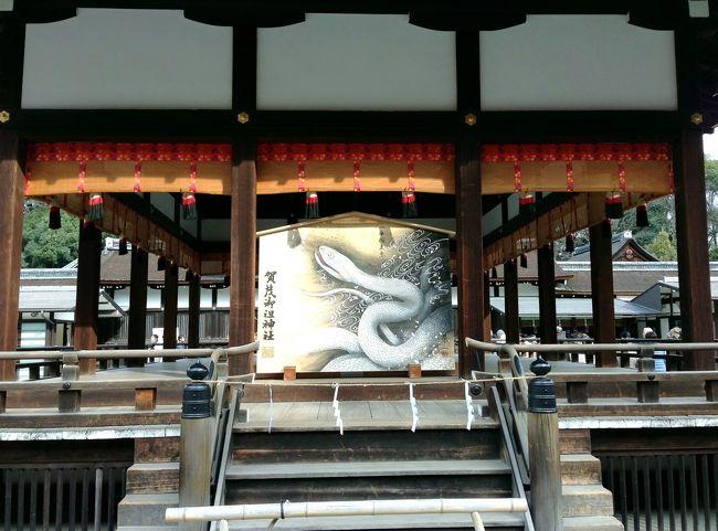 ➛毎年、旅行会社が正月明けに企画する「恵方参り」に参加しました。今年の参拝神社は、京都の賀茂御祖神社(下鴨神社)、滋賀の建部大社と近江神宮で、参加者150名余、4台のバスに分乗しての参拝です。<br />➛最初に訪れたのが世界文化遺産に「古都京都の文化財」の1つとして登録されている賀茂御祖神社(下鴨神社)です。<br />➛下鴨神社 舞殿<br />➛名所・史跡を訪ねて<br />http://bit.ly/XAllgQ