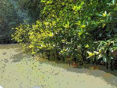 ベトナム・カンザー マングローブ密林の手作りワンダーランド? 2013冬