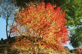 晩秋の木曽路 馬籠宿から妻籠宿そして大平宿へぶらぶら歩き旅