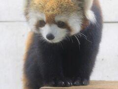 動物/動物園と水族館の旅行記~レッサーパンダ大好き~ 目次【新しい順】