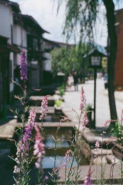 飛騨古川・小春日和 鯉が泳ぐ白壁土蔵の町をぶらぶら歩き旅