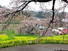 日本の花紀行・桜の名所をたずねて−(1)東北編